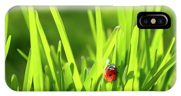 Sunny iPhone Case - Ladybug In Grass by Carlos Caetano
