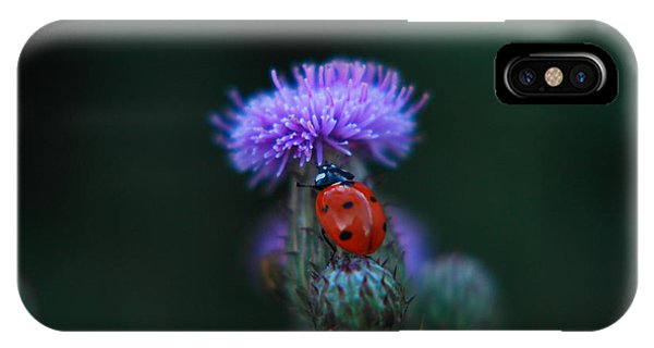 Little Things iPhone Case - Ladybug by Jeff Swan
