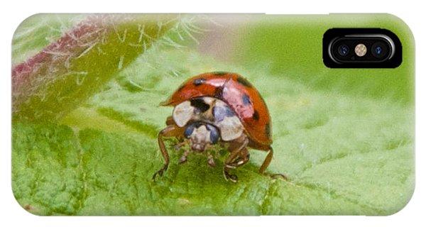 Ladybug On Boneset Leaf IPhone Case
