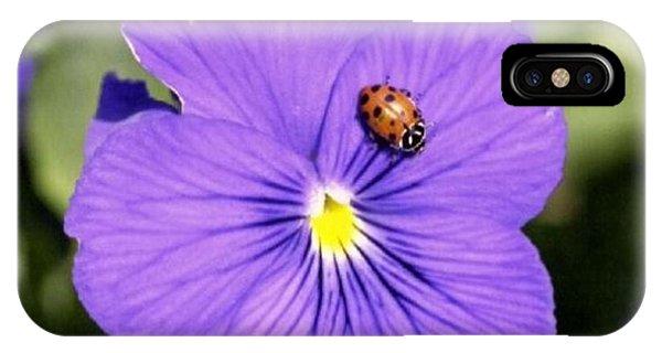 Ladybug On Flower IPhone Case