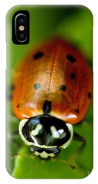 Ladybug iPhone Case - Ladybug On Leaf by Iris Richardson