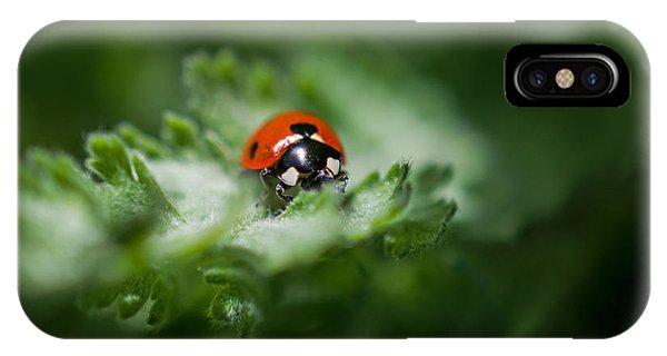 Ladybug On The Move IPhone Case
