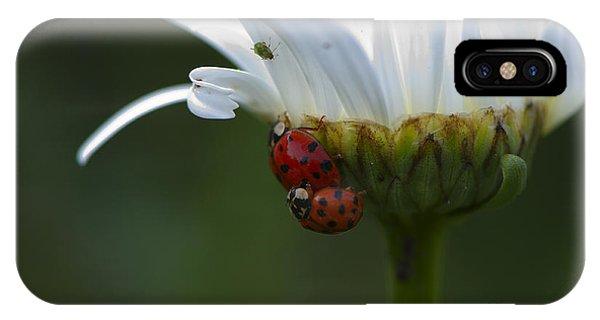 Ladybugs On Shasta Daisy IPhone Case