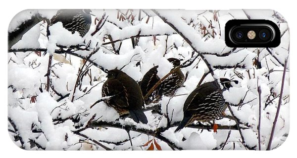 Lake Country Quail IPhone Case