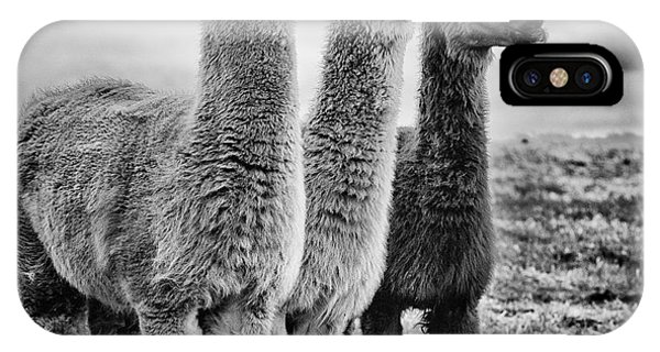 Llama iPhone Case - Lama Lineup by John Farnan