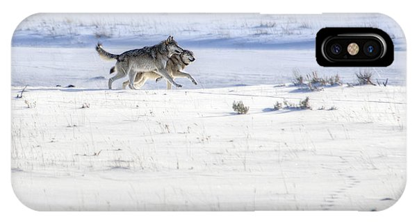Lamar Canyon Wolves IPhone Case