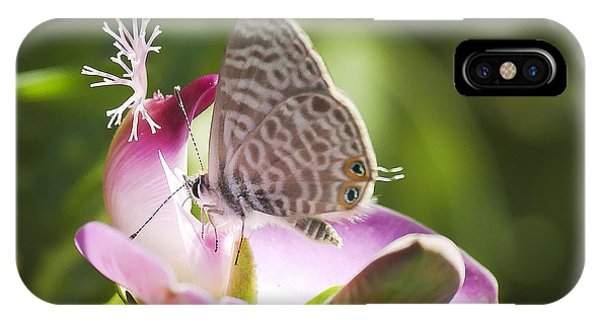 Lang's Short-tailed Blue II IPhone Case