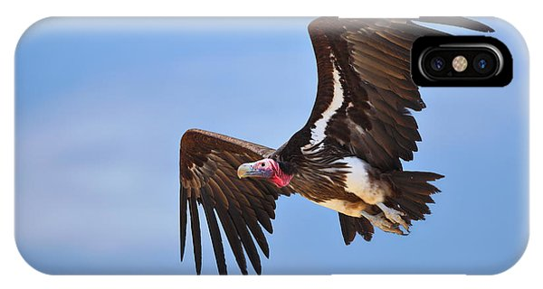 Wings iPhone Case - Lappetfaced Vulture by Johan Swanepoel