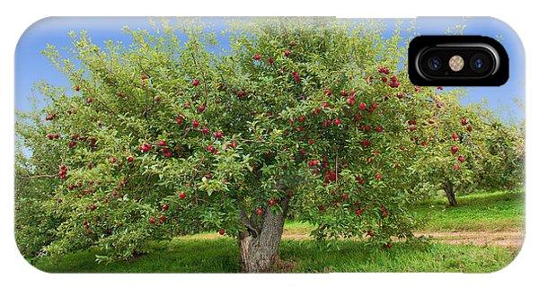 Large Apple Tree IPhone Case