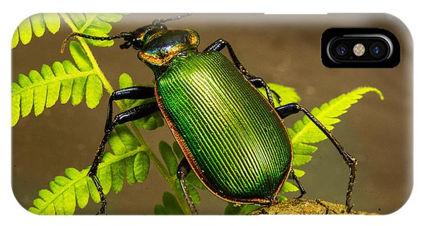 Pterygota iPhone Case - Large Green Beetle by Douglas Barnett