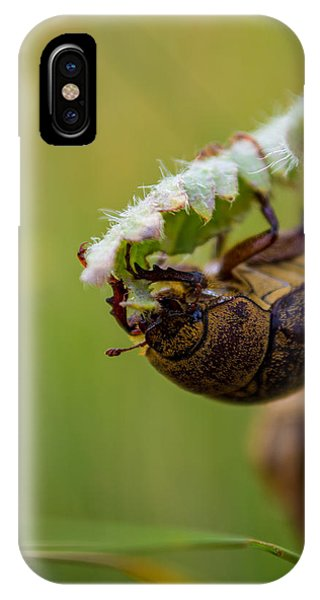Large Lunch IPhone Case