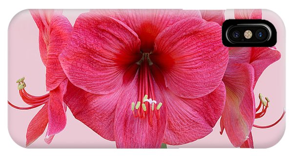 Large Pink Amaryllis With Silky Petals On Pink Phone Case by Rosemary Calvert