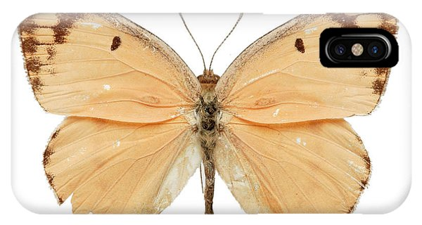 North London iPhone Case - Large Salmon Arab Butterfly by Natural History Museum, London/science Photo Library