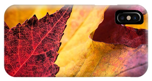 Last Days Of Fall IPhone Case
