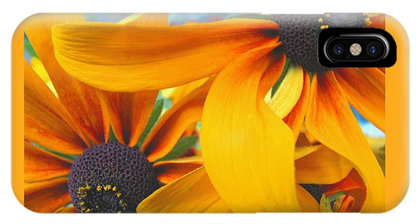 Last Holdouts Of The Season - Black Eyed Susans - Floral Photography IPhone Case