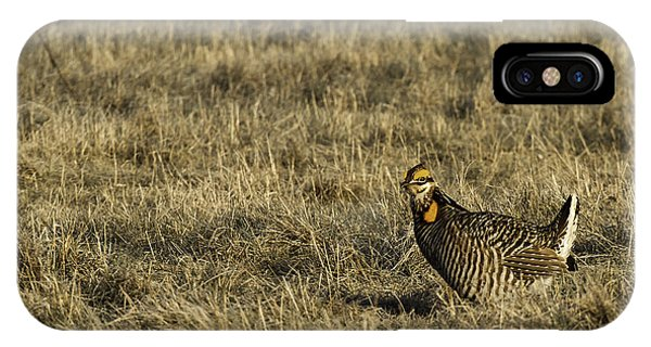 Last Prairie Chicken On The Booming Grounds  IPhone Case