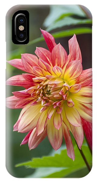 Late Bloomer IPhone Case