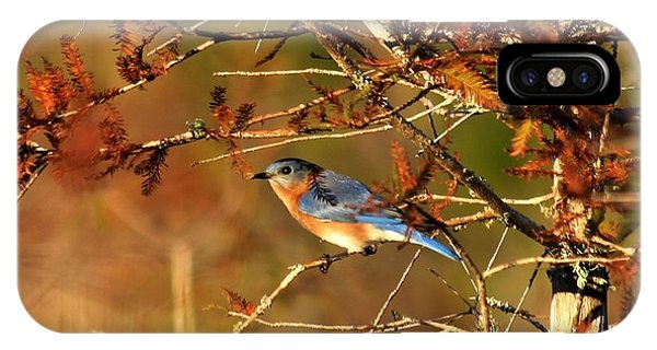 Late Fall Bluebird IPhone Case