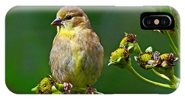 Late Summer Finch IPhone Case