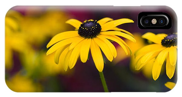 Late Summer Rudbeckia  Phone Case by Tim Gainey