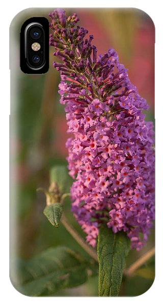 Late Summer Wildflowers IPhone Case