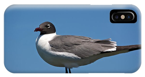 Laughing Gull Phone Case by Kathi Isserman