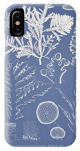 Laurencia Concinna And Hypnea Musciformis IPhone Case