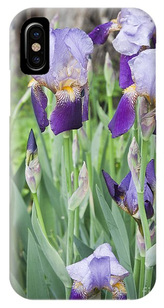 Lavender Iris Group IPhone Case