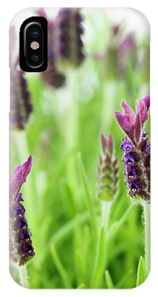 Lavender (lavandula Stoechas) Phone Case by Gustoimages/science Photo Library