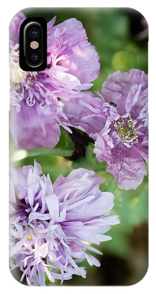 Cultivar iPhone Case - Lavender Peony Poppies by Maria Mosolova