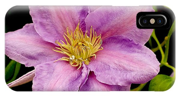 Lavender Pink Clematis IPhone Case