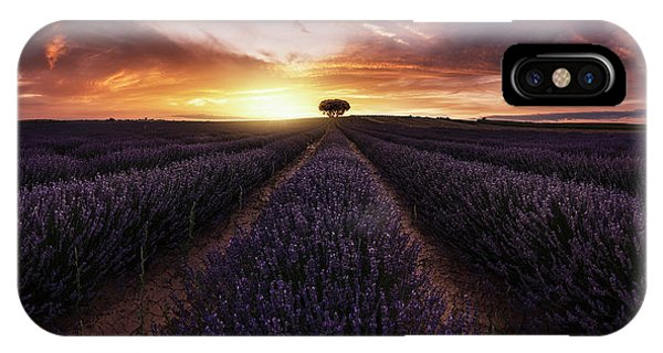 Lavender iPhone Case - Lavender Sunset by Jorge Ruiz Dueso