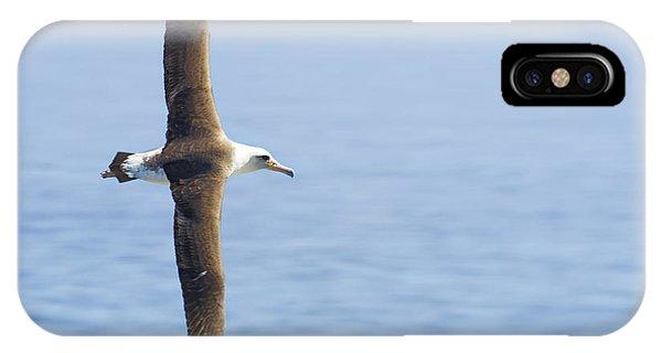 Laysan Albatross No 1 - Kilauea - Kauai - Hawaii IPhone Case