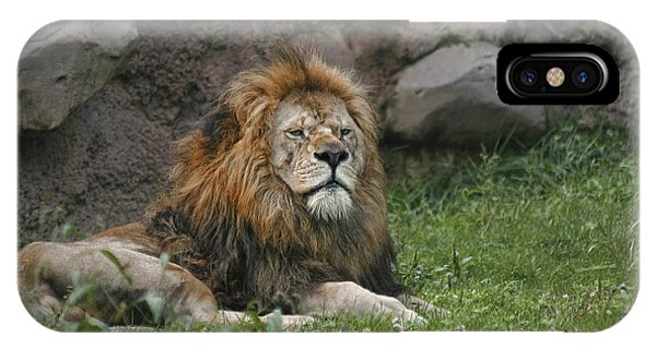 Lazy Lion IPhone Case