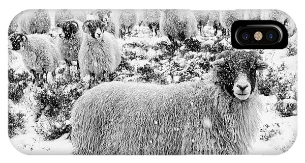 Sheep iPhone X / XS Case - Leader Of The Flock by Janet Burdon