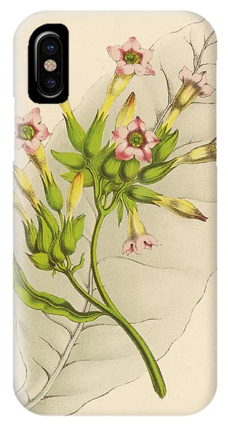 Leaf And Flowers Of A Tobacco  Plant Phone Case by Mary Evans Picture Library