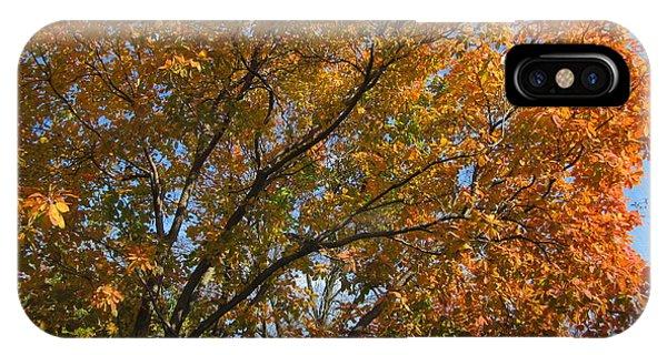 Leaf Canopy IPhone Case