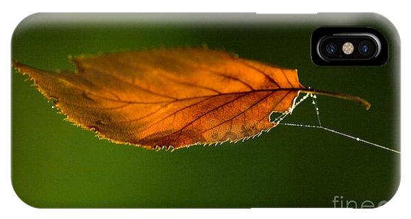 Leaf iPhone Case - Leaf On Spiderwebstring by Iris Richardson