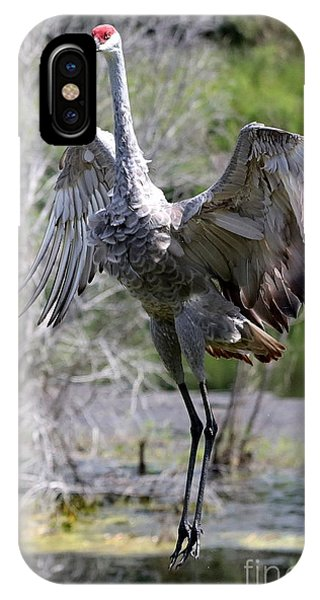 Stop Action iPhone Case - Leaping Sandhill by Carol Groenen