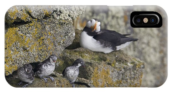 Auklets iPhone Case - Least Auklets Perched On A Narrow Ledge by Milo Burcham