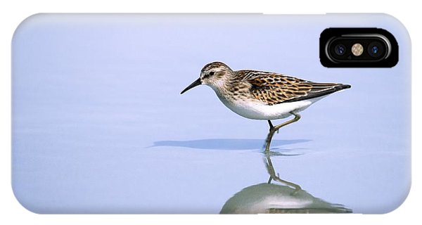 Least Sandpiper With Reflection And Shadow IPhone Case