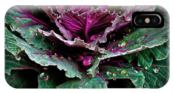 Decorative Cabbage After Rain Photograph IPhone Case