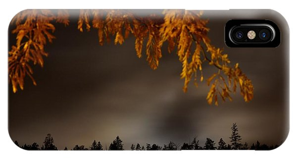 Leaves In The Night II Phone Case by Phil Dionne
