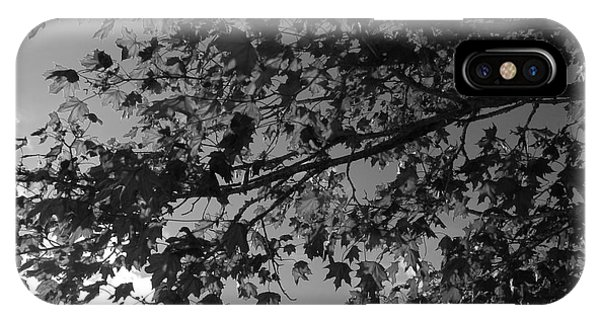 Leaves On A Tree IPhone Case
