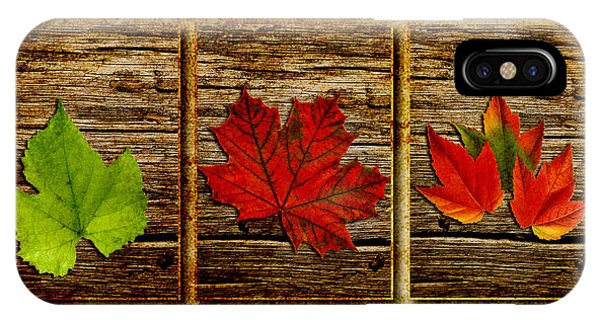 Leave iPhone Case - Leaves Triptych by Rene Larsen