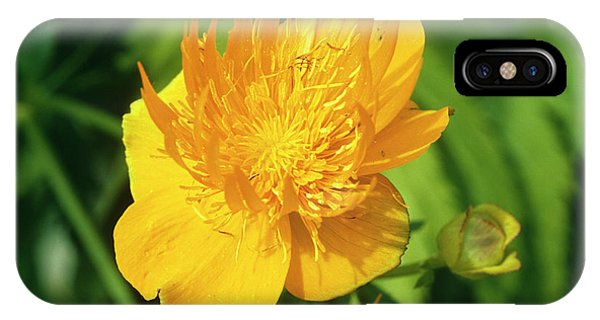 Golden Gardens iPhone Case - Ledebour Globeflower by Sally Mccrae Kuyper/science Photo Library