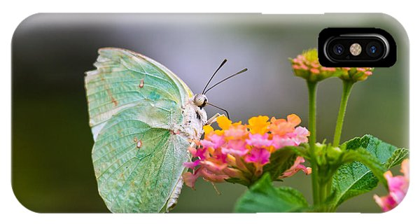 Lemon Emigrant Butterfly IPhone Case