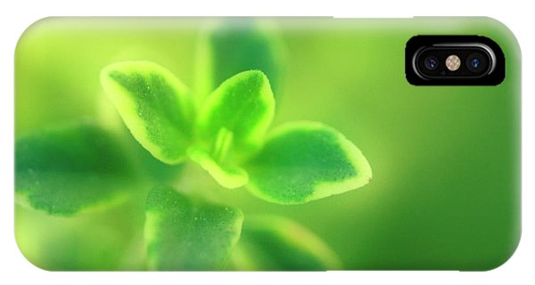 Golden Gardens iPhone Case - Lemon Thyme (thymus X Citriodorus) by Maria Mosolova/science Photo Library