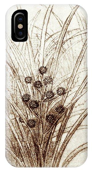 Monocotyledon iPhone Case - Leonardo Da Vinci's Rushes In Flower by Sheila Terry