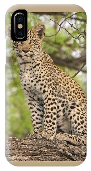 Leopard Cub Gaze IPhone Case